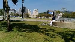 中市府公園勸導民眾勿餵野鴿 18日起開罰