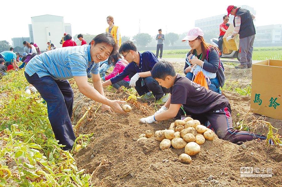 都市農人郭銘村(左)指導民眾挖馬鈴薯的方法。(廖素慧攝)
