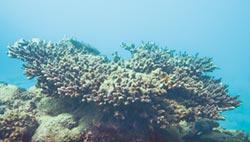 淨港有成 珊瑚群是鐵證