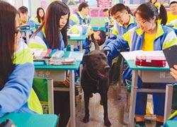 守護校園 2校犬療癒師生