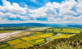 水情吃緊 中市種稻轉作變更申報延長至2月底