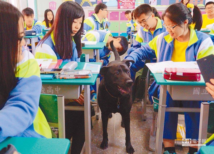 人人愛  大白雖然一身黑,個性溫和相當乖巧,還會陪伴警衛巡邏校園,身受同學喜愛。(甘嘉雯攝)