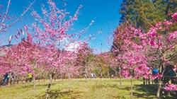 阿里山花季 3月10日開跑
