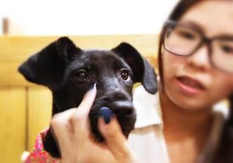 ᴥ 哈哈窩寵物精品館 給毛小孩一個溫暖的家 ᴥ   愛心領養活動贈1000元購物金