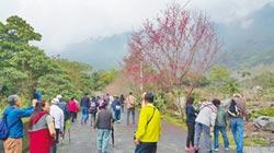 壽豐樹湖祕境 228賞櫻好時機