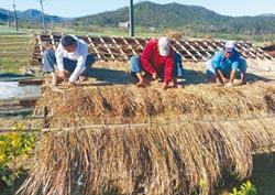 社區總動員 純手工搭建茅屋