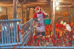 廣東禽流感病毒變異 專家籲勿買活禽