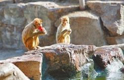 入不敷出 兩岸私人動物園轉型