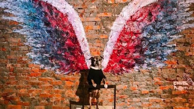 風靡全球的藝術作品天使翅膀降臨台灣。(圖/Instagram@colettemillerwings)