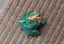 花蓮驚傳綠色毒雞頭 3狗誤食死