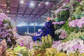 上萬朵蘭花打造台灣帝雉 台灣國際蘭展4日開園