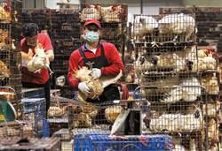 《美好社會》H5N6禽流感爆發 火燒後院