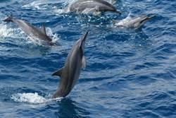 賞鯨團驚見浮屍 業者送紅包壓驚