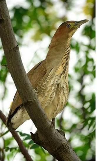台積電生態園有木頭鳥