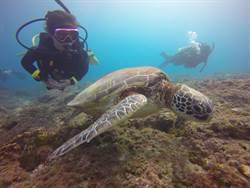 近距離接觸綠蠵龜  潛水教練的5S要訣