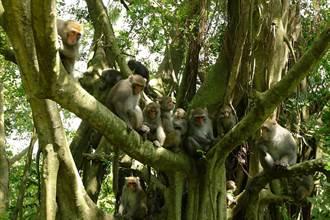 探索壽山獼猴生態  拍攝影片紀實