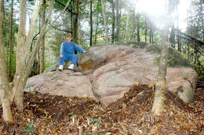 蓮華池居民與林試所員工,在火焙坑一處山脊最高處的茂密森林中,找到傳說中的巨石。(沈揮勝攝)