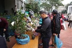 312植樹節將至 贈樹苗又加開樹木診所