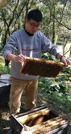 新北市內綠色保育驚喜-東方蜂鷹 三芝養蜂生態教學-牧蜂農莊