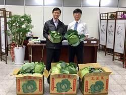 高麗菜價暴跌 大竹國小號召購買農夫綠寶石