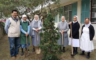 婦女節感恩修女 林務局移植蘭嶼羅漢松