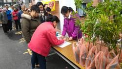 植樹節到了 高市各區公所12日送樹苗