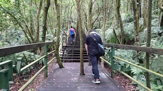 內雙溪森林樂活嘉年華 遊「樹之亭」森呼吸