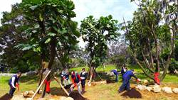 城市科大種麵包樹 祝學生「樹」造高薪