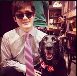 人有1例1休 導盲犬隨時補眠老了退休