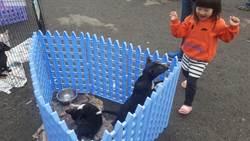 宣導動物保護 苗栗縣府巡迴施打疫苗植晶片