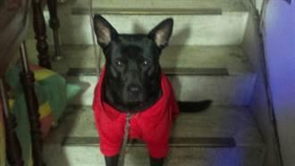 狗籠罩黑布 養出的狗會比較兇嗎?