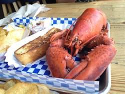 大陸食客熱捧 美國龍蝦瘋狂暢銷