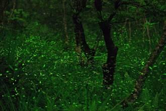 遊花蓮大農大富 日訪龍貓森林夜探螢光秘境