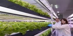 為身體健康著想 老闆花千萬種水耕菜請員工食用