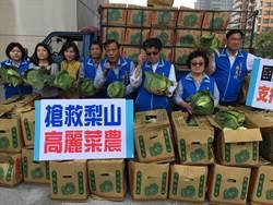 高麗菜價跌 市府積極協助農民銷售
