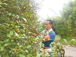 培訓青農深耕 每月補助3萬