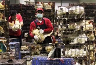 病毒基因突變 H7N9禽傳人關鍵找到了