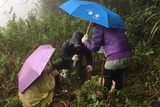 廢棄果園變原始林 志工冒雨上山復育