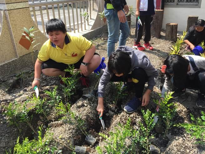 林務單位深入位於原鄉部落的博愛國小,推廣植樹、護樹理念,學童於校內種植台灣原生樹種。(王文吉攝)