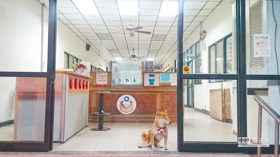 台南市警第三分局率先響應「流浪動物多元化認養」,首批5隻「波麗士警衛犬」宣告正式成軍,未來將協助派出所駐地警戒。(台南市警三分局提供)