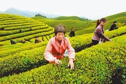 穀雨茶最養人 祛濕健胃防過敏