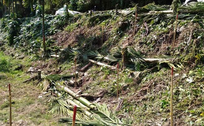 林務局「造林工作假期」,邀請社區志工共同剷除非法檳榔樹。(許家寧攝)