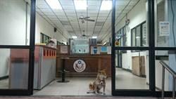 多元認養  台南波麗士警衛犬成軍