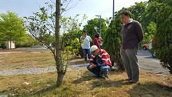 和樹說說話  環保掃墓最節能