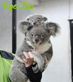 兒童免費入園!快到動物園歡度兒童節