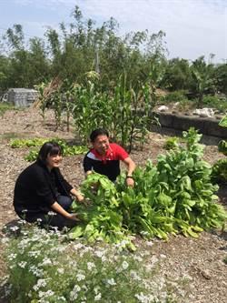 廢木屑種蔬果  謝志忠:降垃圾處理成本