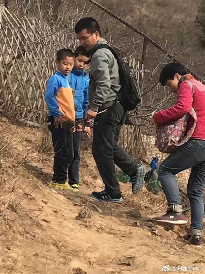 大陸網友3日在微博爆料,北京八達嶺野生動物園疑有遊客下車,還拔了孔雀尾巴毛。(取自網路)