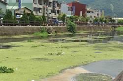 杷城排洪道將辦水上燈會 環境髒亂被詬病
