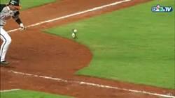 獅猿戰球棒界內碰球判決 聯盟承認誤判