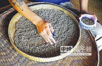 巴西咖啡農改種黑胡椒